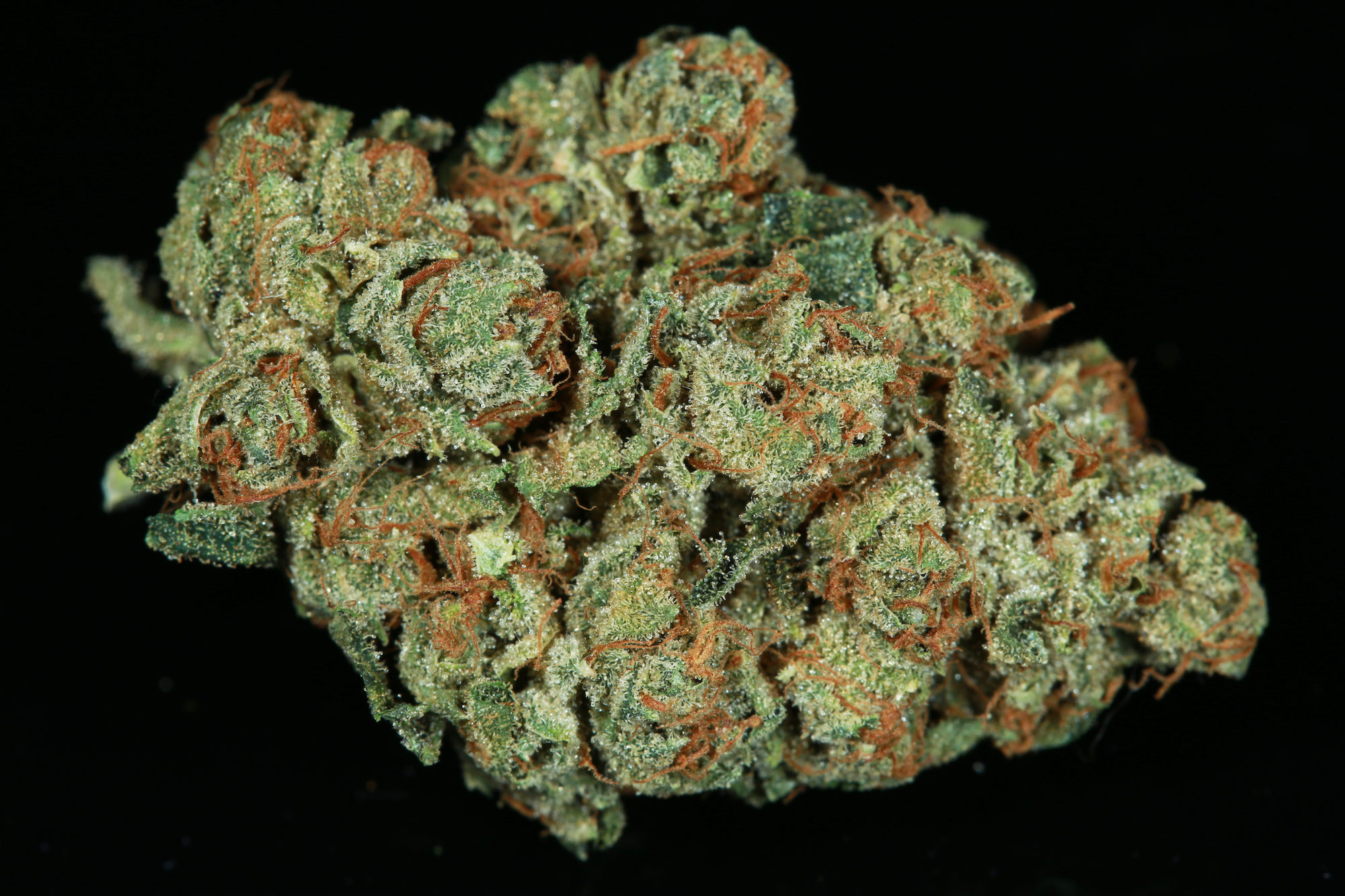 SFV-OG-marijuana-matrix-nevada-best-weed-ever-3