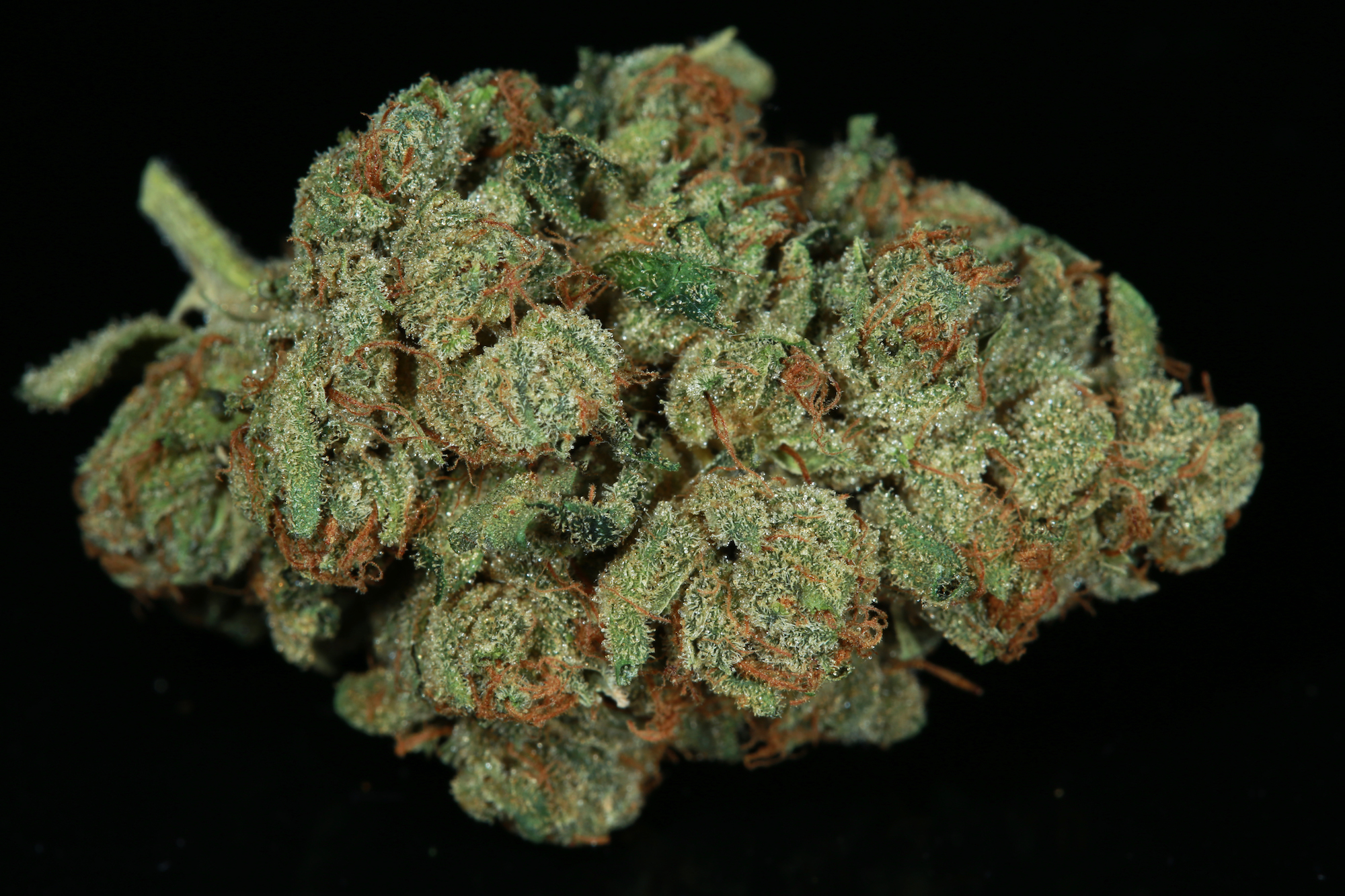 SFV-OG-marijuana-matrix-nevada-best-weed-ever