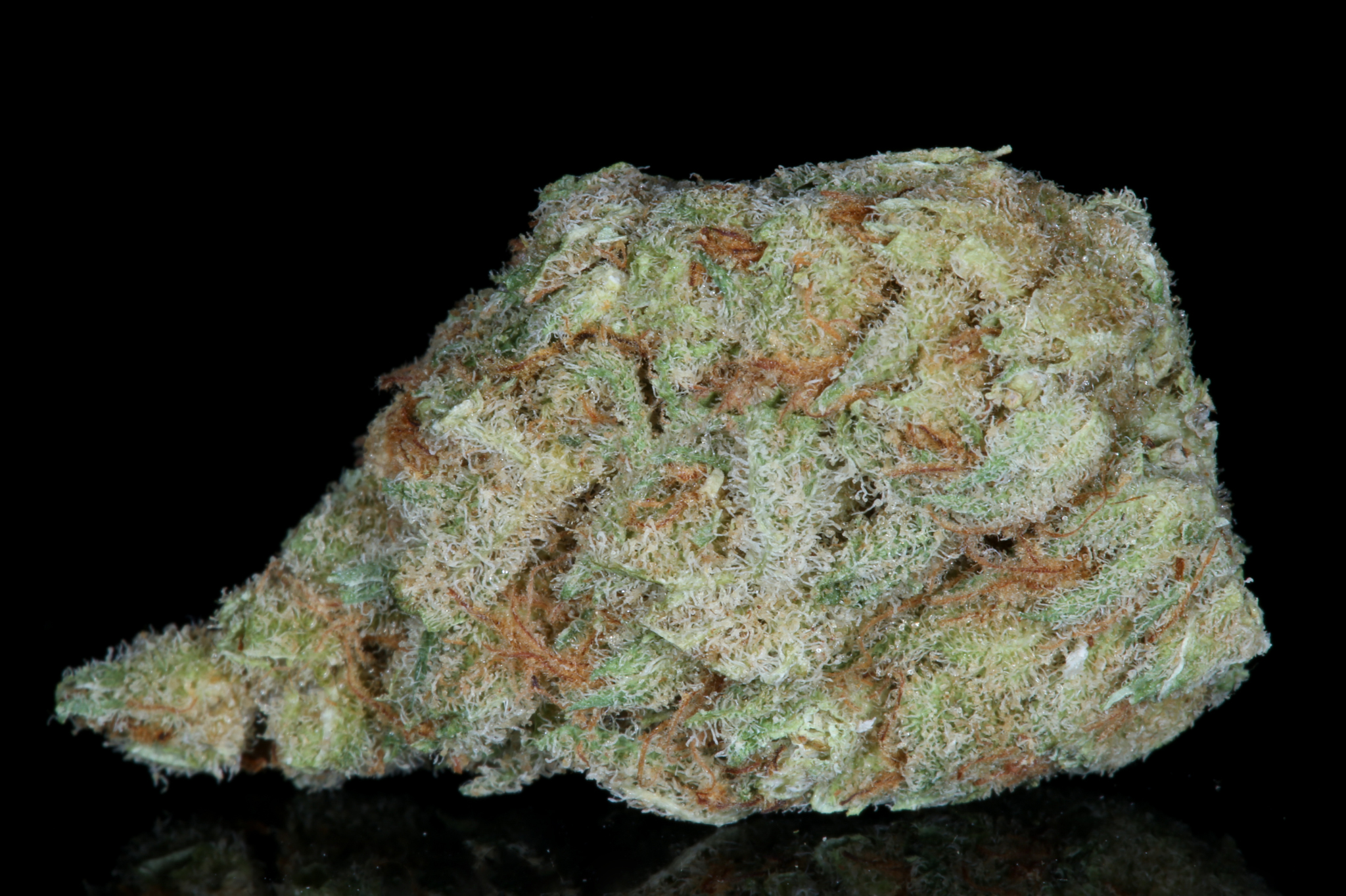 Slymer-weed-strain-matrix-tga-genetics-chernobyl-nevada-matrix-best-weed-ever-Dried-4702