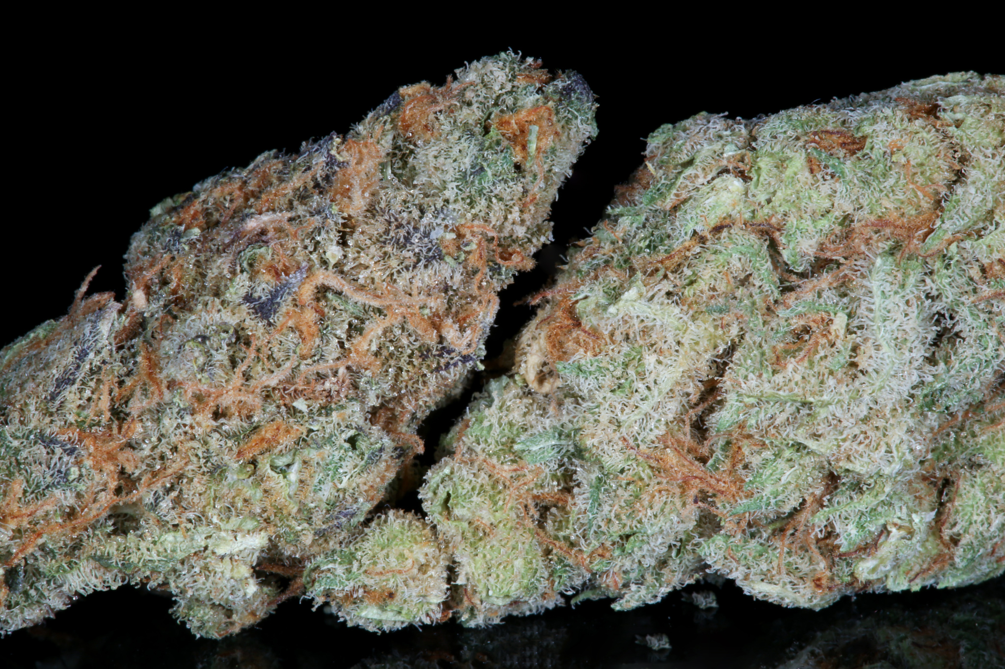 Slymer-weed-strain-matrix-tga-genetics-chernobyl-nevada-matrix-best-weed-ever-Dried-4706