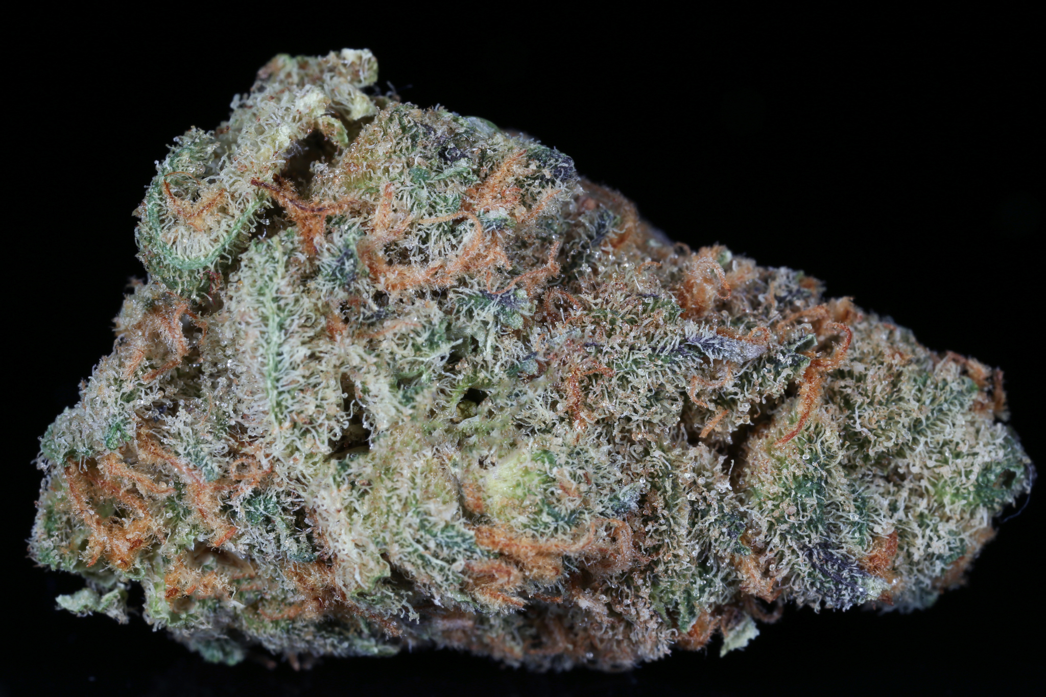 Slymer-weed-strain-matrix-tga-genetics-chernobyl-nevada-matrix-best-weed-ever-Dried-4720