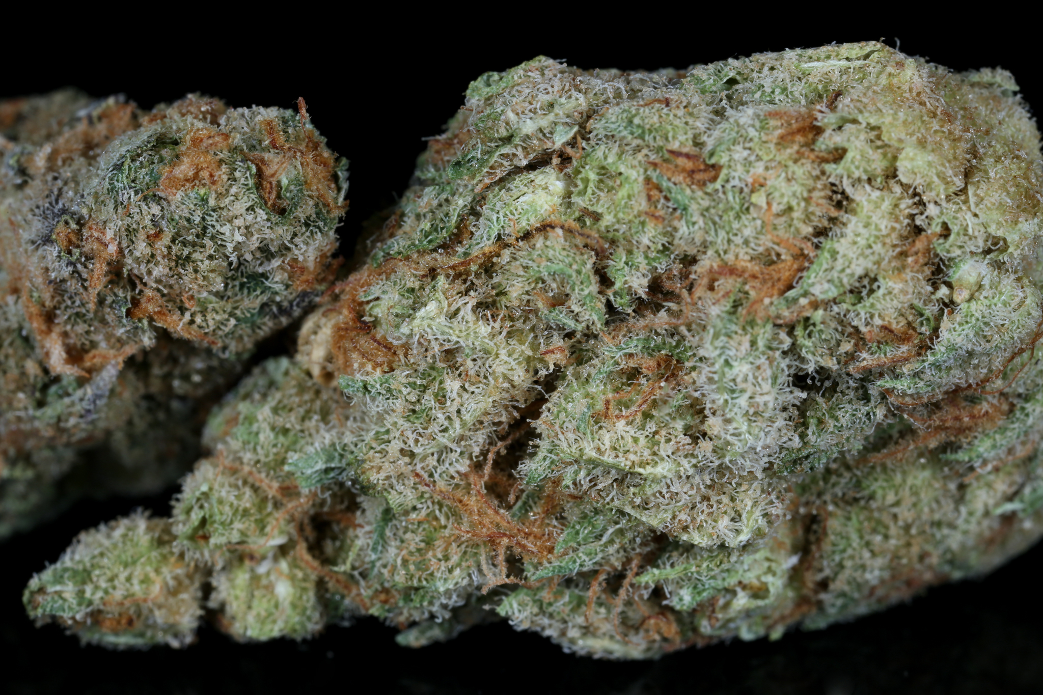 Slymer-weed-strain-matrix-tga-genetics-chernobyl-nevada-matrix-best-weed-ever