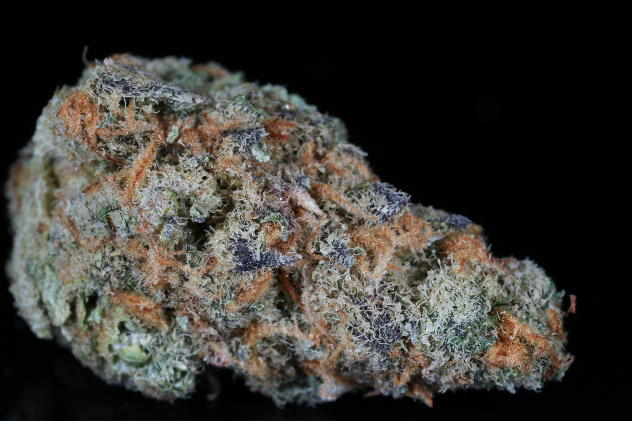 Slymer-weed-strain-matrix-tga-genetics-chernobyl-nevada-matrix-best-weed-everDried-4725