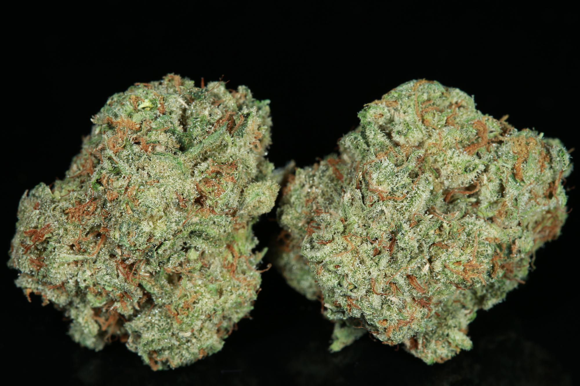 chocolito-marijuana-matrix-nevada-best-weed-ever-chocolope-tangie-3