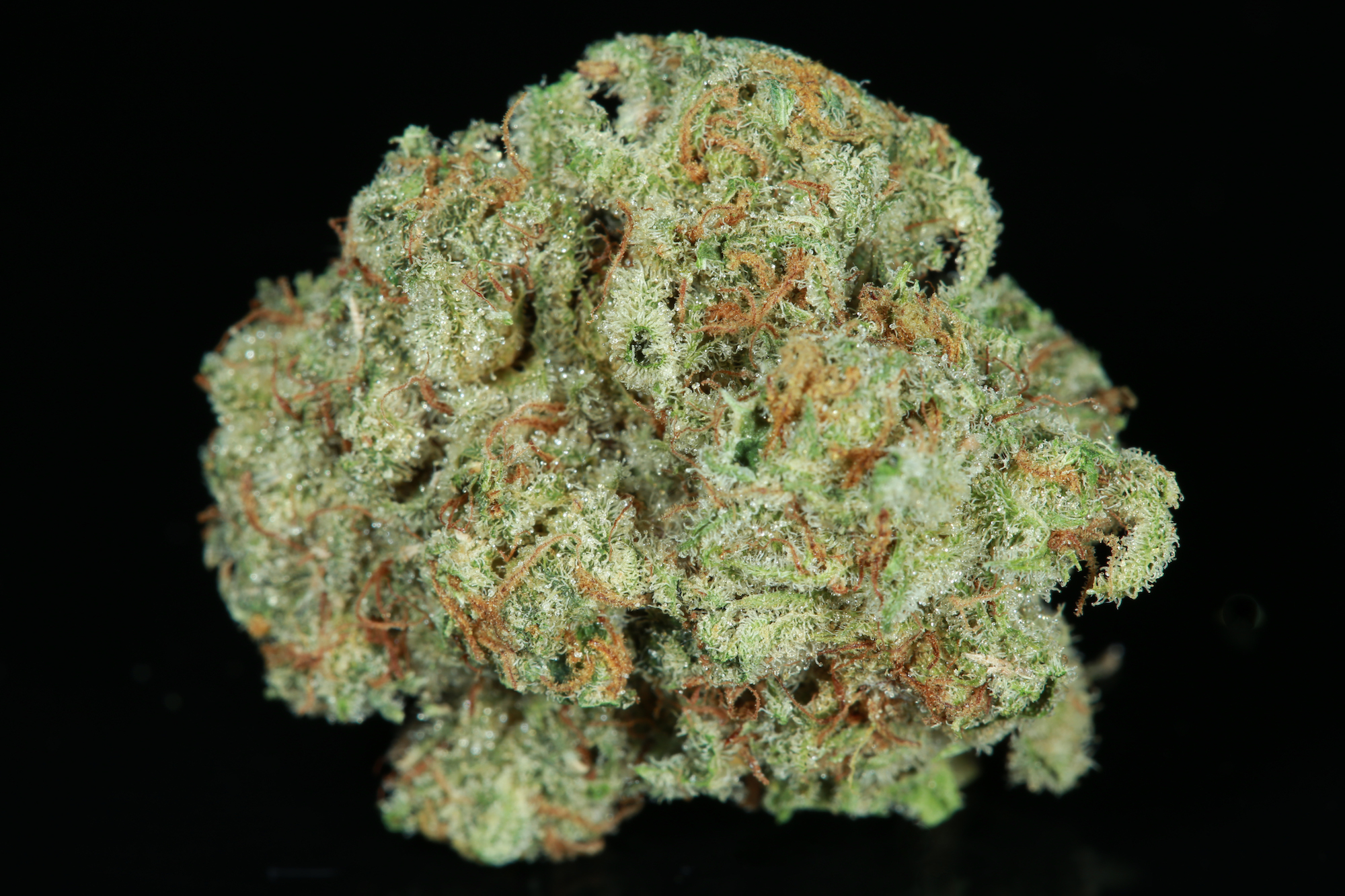 chocolito-marijuana-matrix-nevada-best-weed-ever-chocolope-tangie
