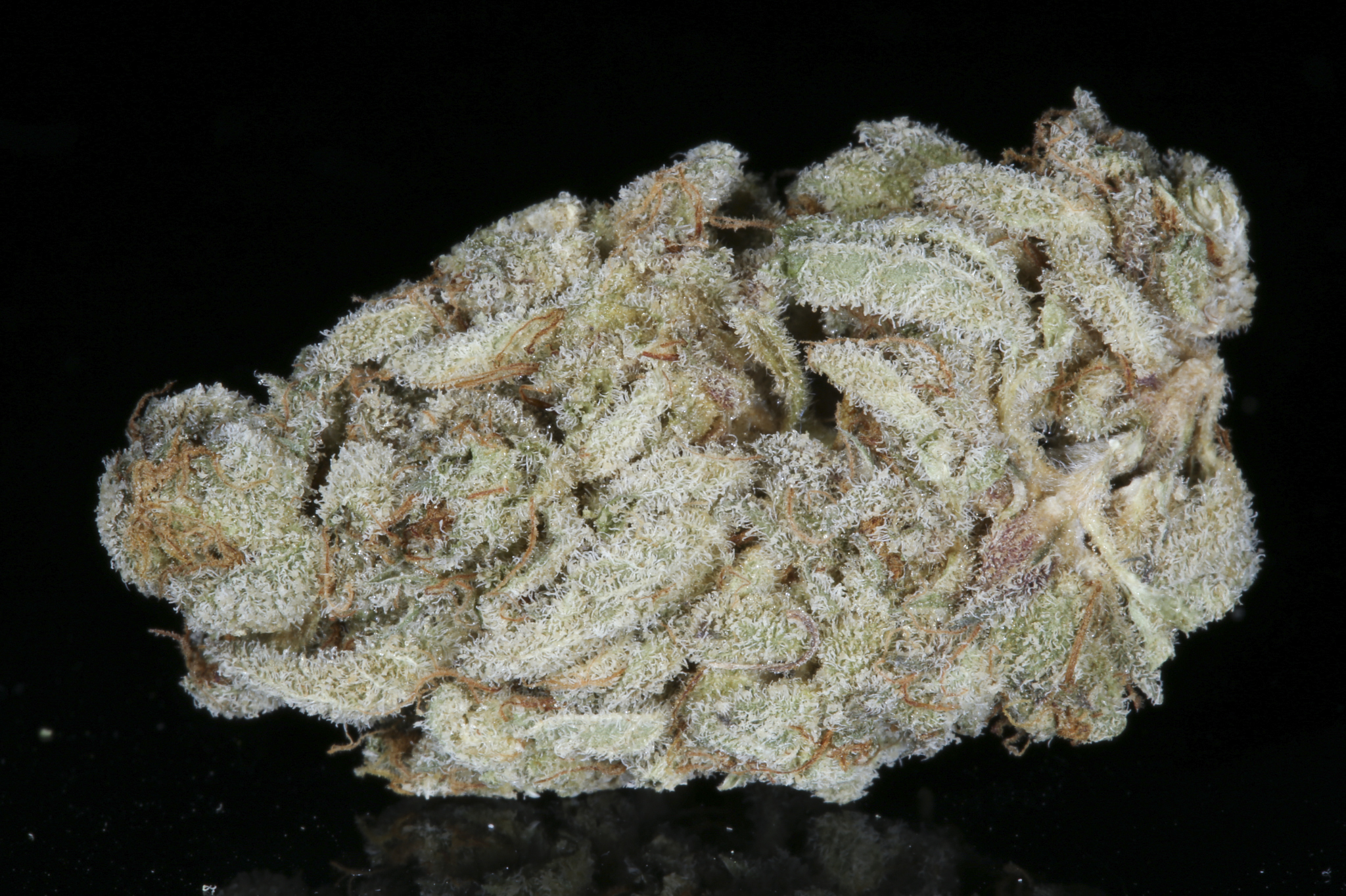 mendo breath dried-4638