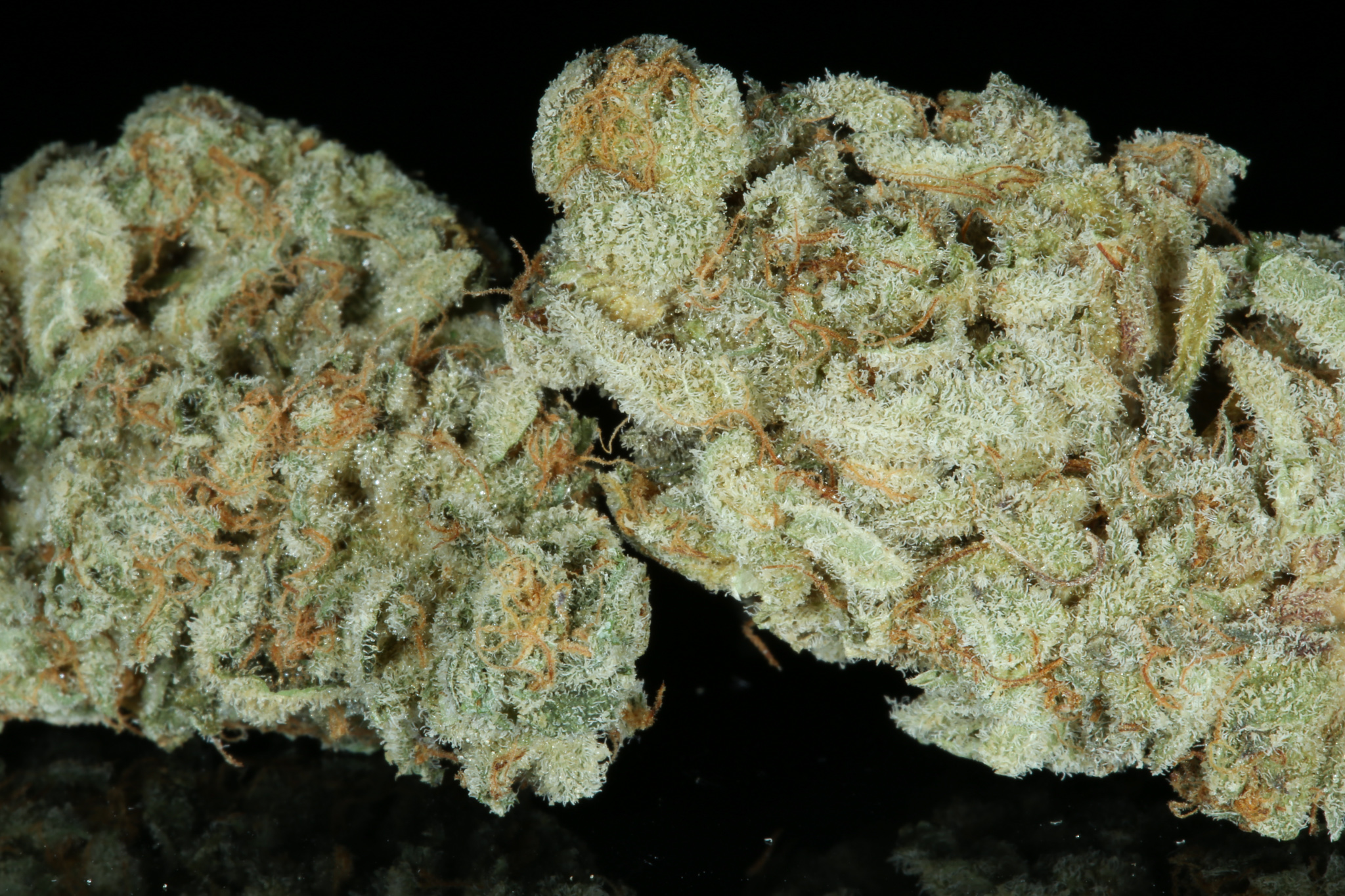 mendo breath dried-4641