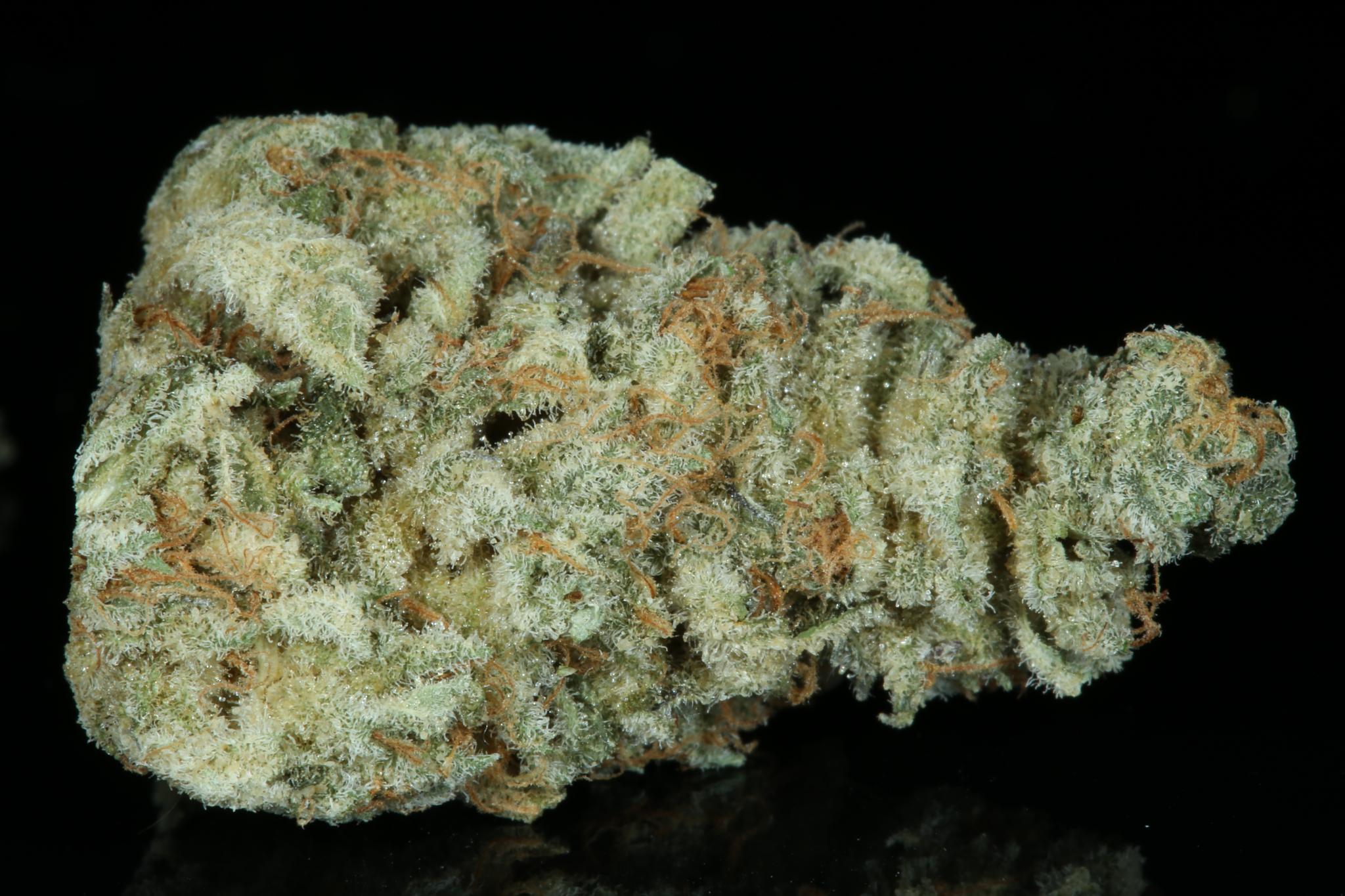 mendo breath dried-4647