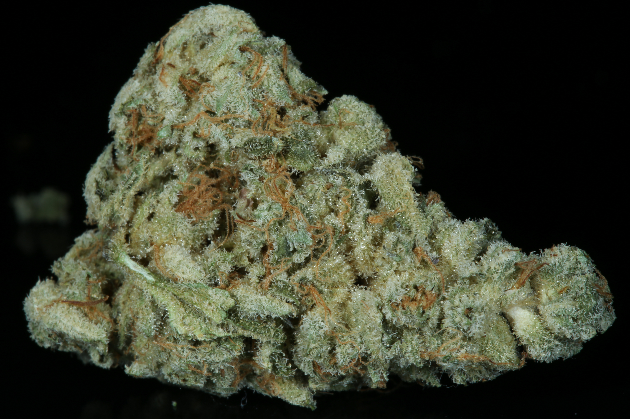 mendo breath dried-4656